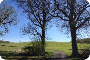 Anne Wood Park